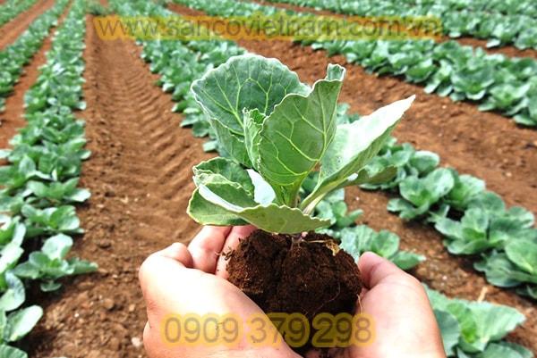 Phân bón nông nghiệp
